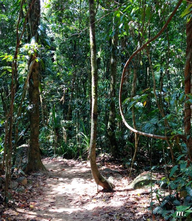 Rainforest11