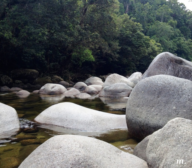 Rainforest14