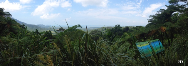 Rainforest17