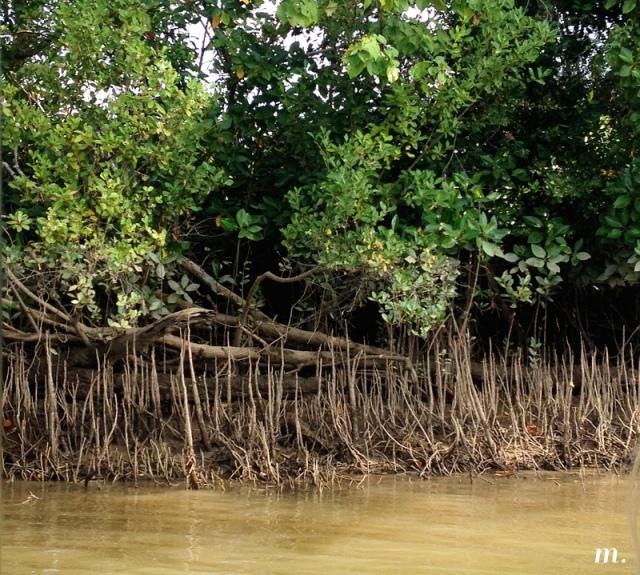 Rainforest22