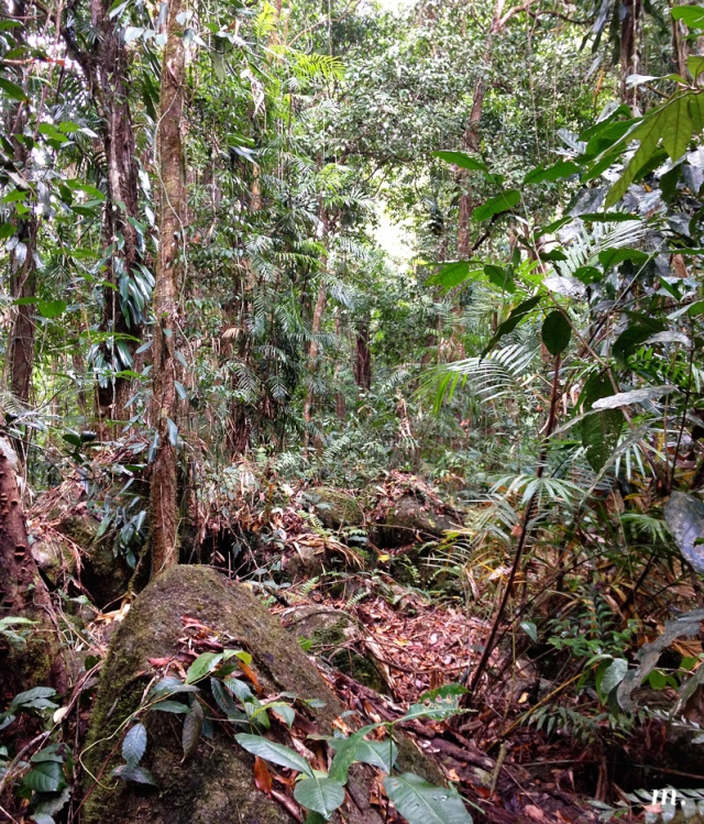 Rainforest7