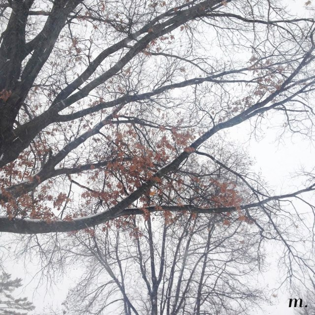 Snow_Day02