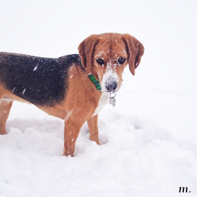 Snow_Day04