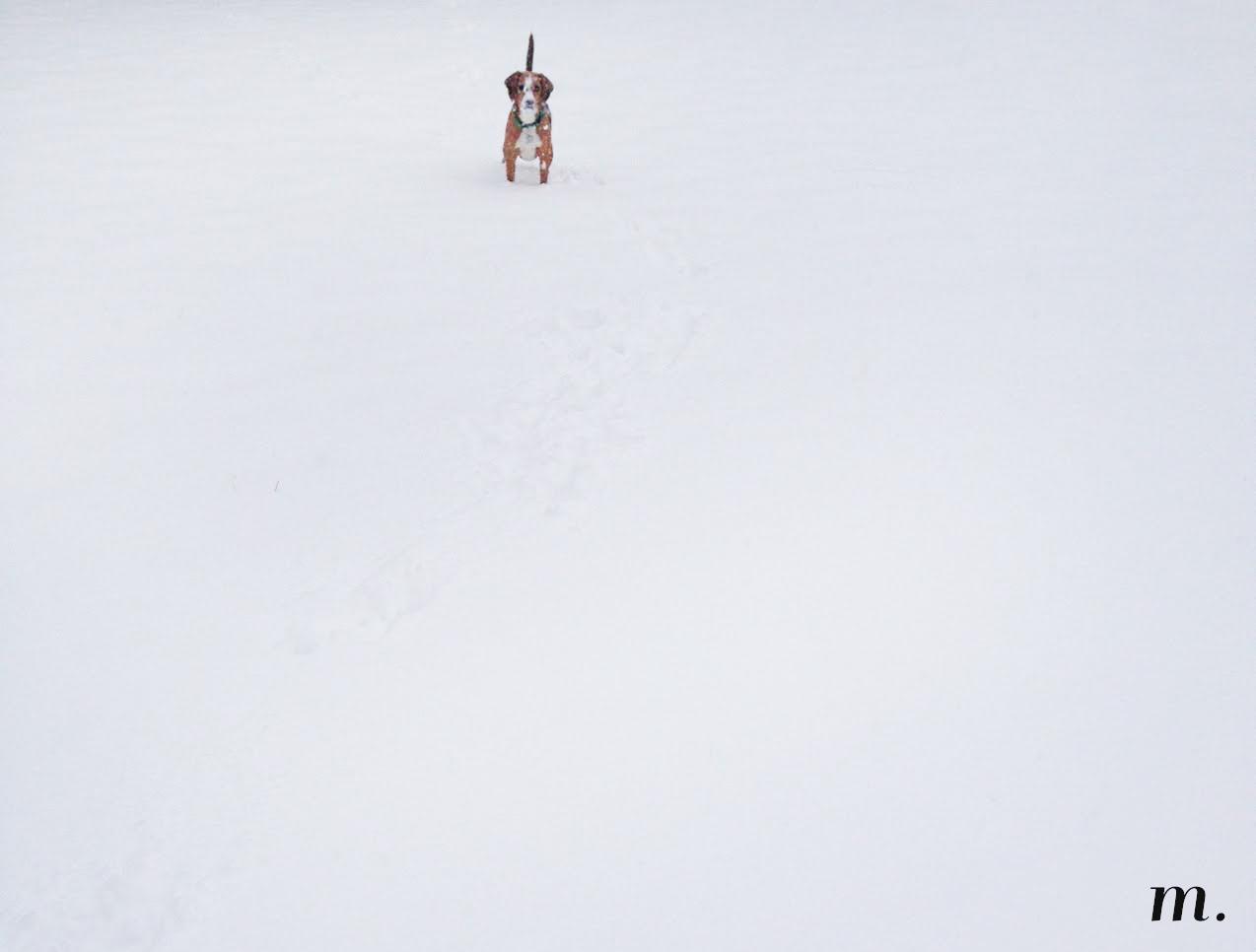 Snow_Day05